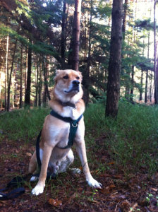 Playtime in the Pines - 16-12-2012