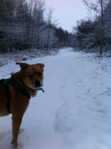 Theo - Toy's Hill - long path in the snow - 18-01-2013