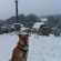 Theo---Snow---Westerham-Church-(lick)