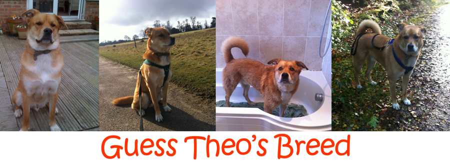 Guess Theo's Breed
