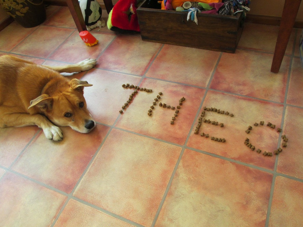 Theo Name in Biscuits - 14-11-2013