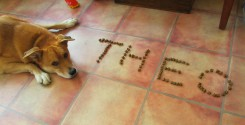 Theo Dog Name in Biscuits Game (Leave it)