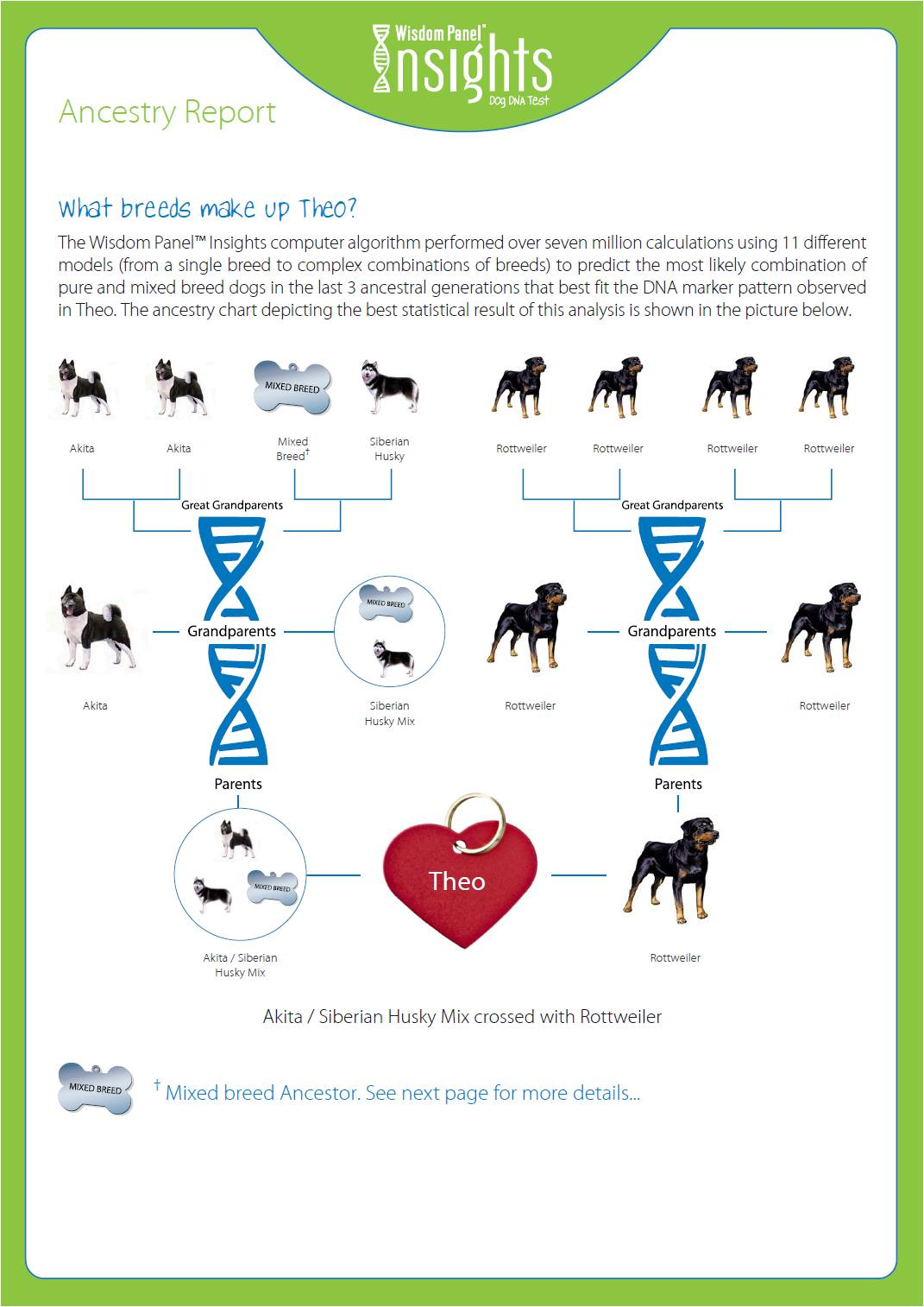 Theo's Dog DNA Results