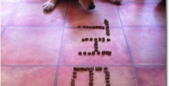 Theo Dog Spells His Name in Kibble